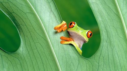 frog-3167
