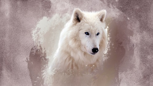 the-wolf-3184